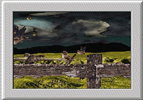 Telecharger Oiseaux2