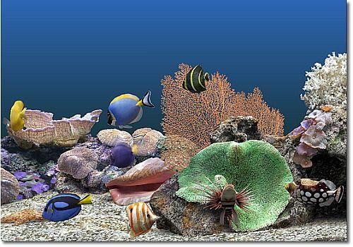 moving fish tank wallpaper for ipad
