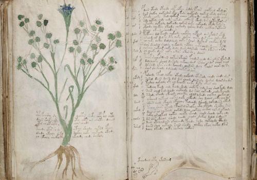 Telecharger le Manuscrit de Voynich