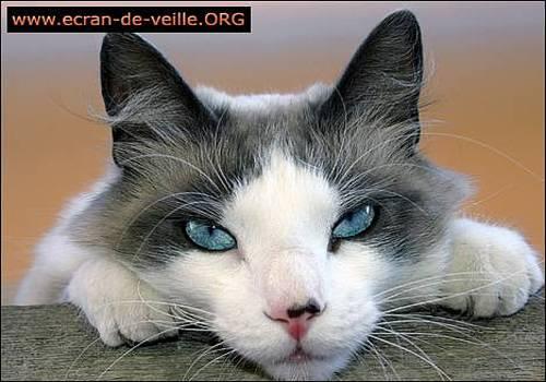 Telecharger Ecran de Veille ORG Chat