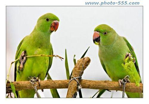 Telecharger Photo-555.com Album 2 Screensaver